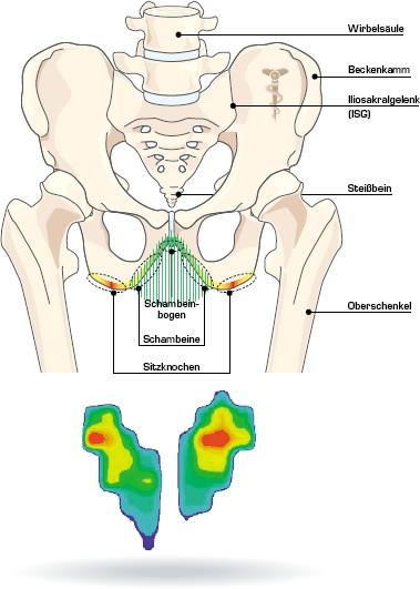 Fahrradsättel: Gesäß-Anatomie und Sattelbreite