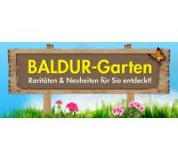 Onlineshop Für Pflanzen Und Gartenzubehör
