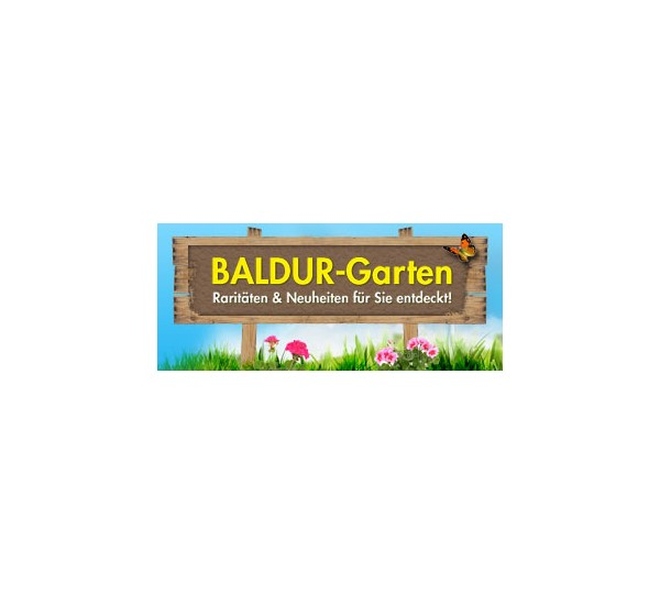 baldur garten pflanzenversand gartenversand test. Black Bedroom Furniture Sets. Home Design Ideas